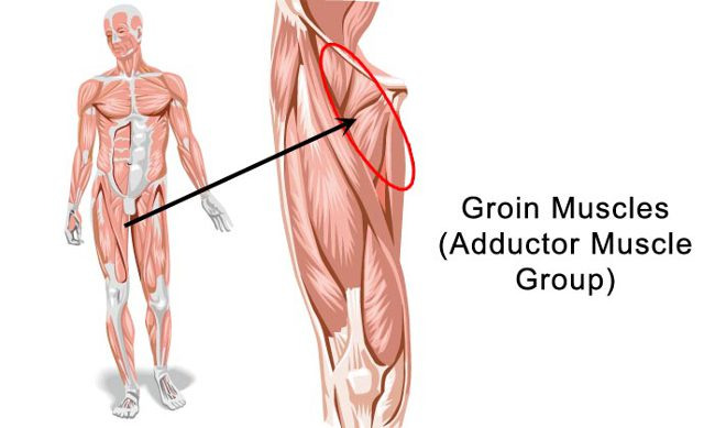 Related image for groin strain