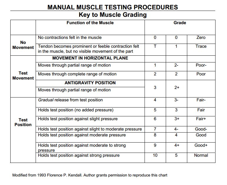 Principles of manual muscle testing ppt video online download.